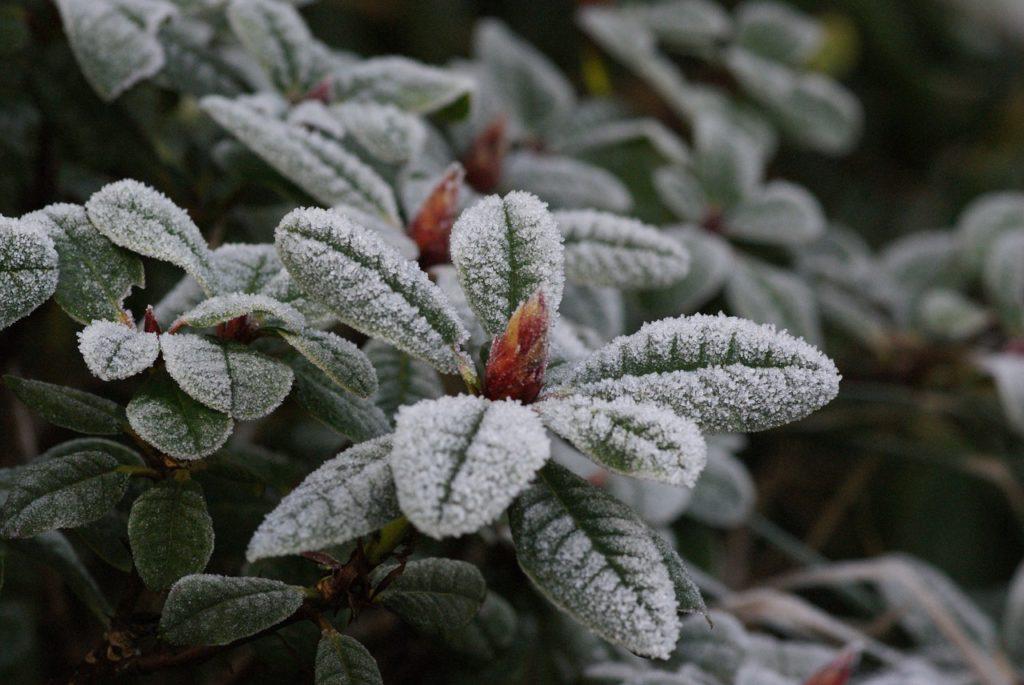 Uma planta de folhagem toda congelada.