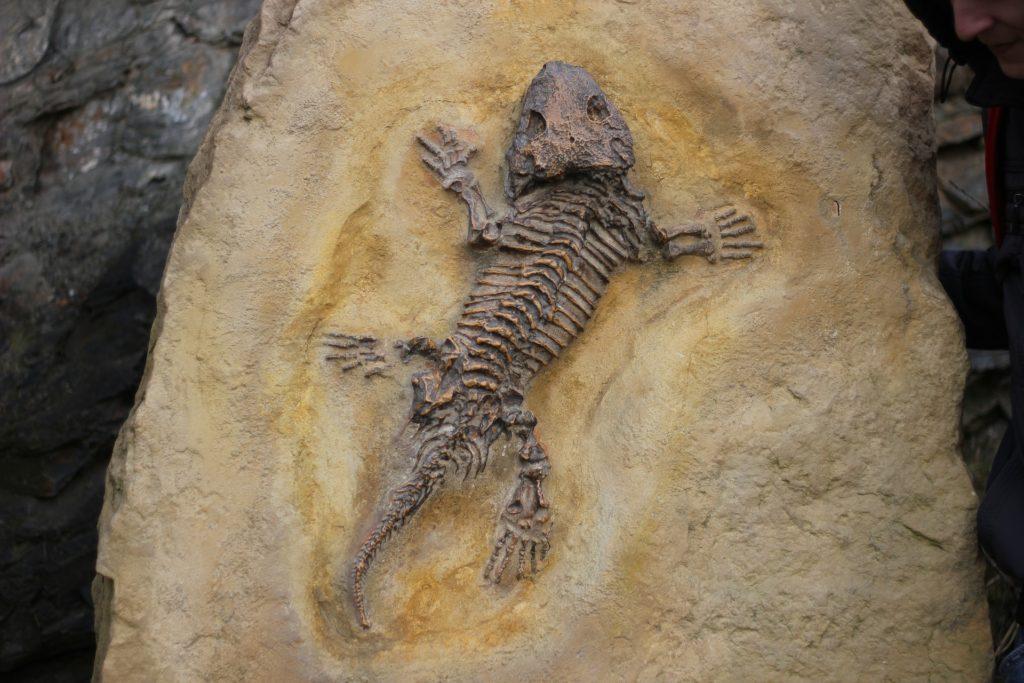 Fóssil de um animal semelhante a um réptil de quatro patas e cauda.